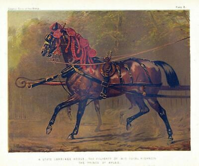 State Carriage Horse Of Royal Highness, Prince Of Wales