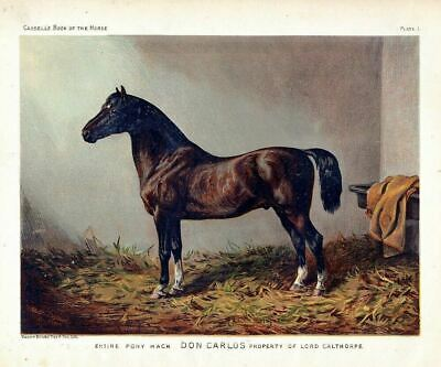 Horse Antique Chromolithograph, Pony Hack Don Carlos