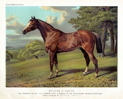 Horse Rare Antique Chromolithograph, Stilton A Hunter