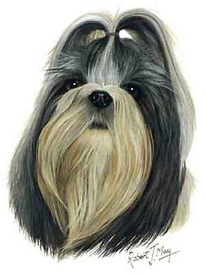 SHIH TZU Dog Robert May Art Greeting Card Set of 6