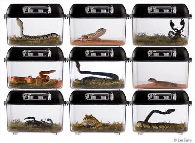 Exo Terra Breeding Box Stackable Terrarium Reptile Snake Frog Transportation