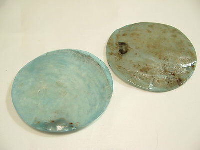 3 x Natural Shell Dyed Pendants: BNSP64 Turquoise
