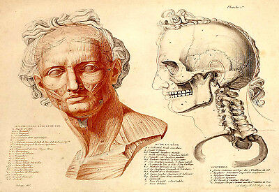 2 x Repro Anatomical Prints by Jean Galber Salva 1812