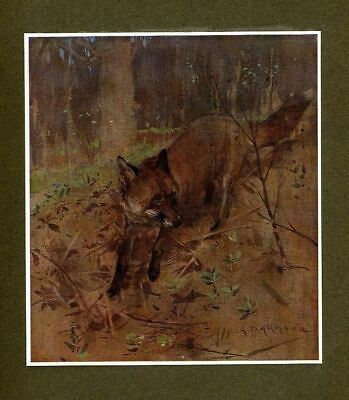 Fox, The Old Customer, Antique Fox In The Woods Color Print, Vintage Fox Thief