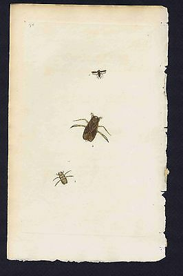 Insects & Beetles 1803 Donovan Hand Colored Plate #176