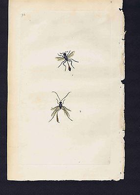 Cimex acuminatus & lacustris (Pond skaters)1800 Donovan Hand Colored Plate #118