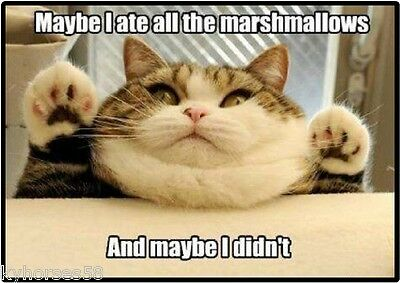 Funny Cat Humor Ate All The Marshmallows Refrigerator Magnet
