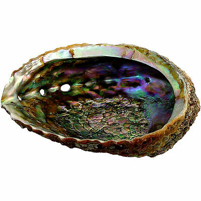 LARGE ABALONE SHELL INCENSE BURNER Wicca Pagan Witch SMUDGE Bowl Burner Herb
