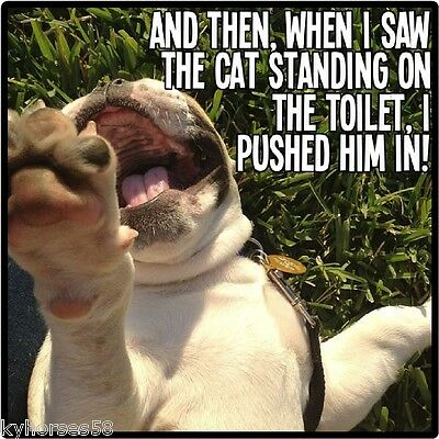 Funny Dog Humor When I Saw The Cat Standing On The Toilet Refrigerator Magnet