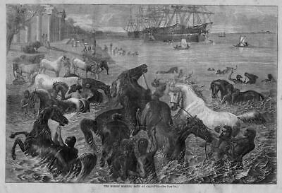 Horses Morning Bath In The River At Calcutta India Ships Vessels 1868 History