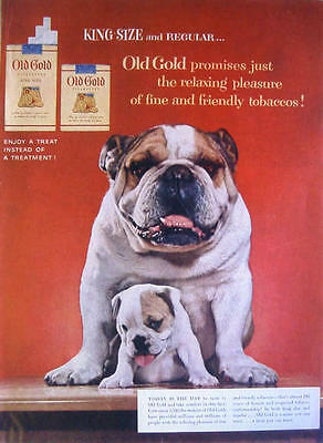 1954 OLD GOLD CIGARETTES - ENGLISH BULLDOG AND PUPPY Print Ad!!