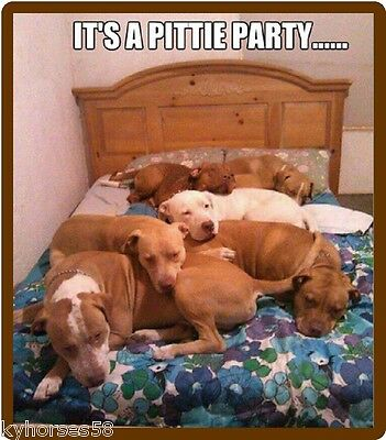 Funny Pitbulls It's A Pittie Party Refrigerator Magnet