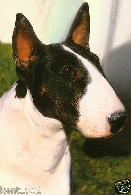 English Bull Terrier Jumbo Fridge Magnet