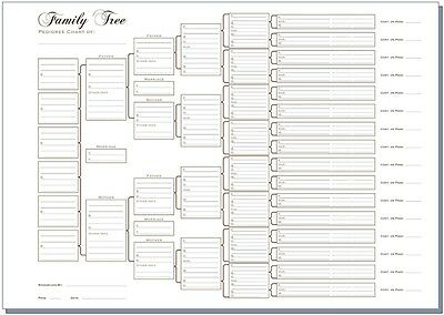 A3 Six Generation Family Tree Chart - Pedigree (pack of 3) Rolled in a Tube