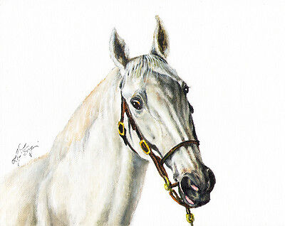 ★ Original Oil HORSE Portrait Painting PONY Artwork SIGNED Gray Stallion Grey