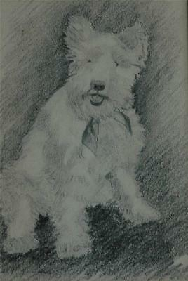 Beautiful Vintage Charcoal Drawing of an Adorable West Highland Terrier Dog
