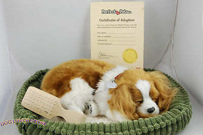 Cavalier King Charles Life Like Stuffed Animal Breathing Dog Perfect Petzzz