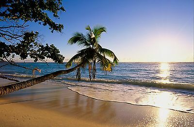 Tropical beach scenery Palm trees ocean Decor wall art Poster personalized Free