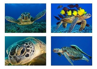 4 - Sea Turtle / Sea Turtles 5 x 7 / 5x7 GLOSSY Photo Picture LOT