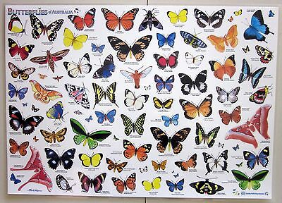 Butterflies Of Australia Laminated Poster Chart