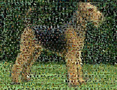 Amazing Airedale Terrier Dog Montage 1 of only 25 w/COA