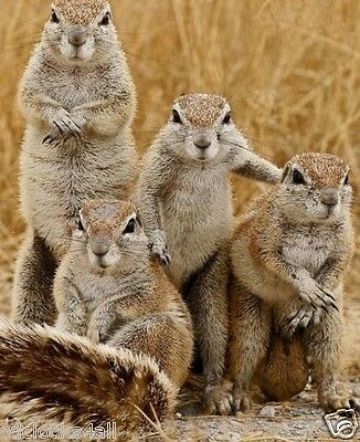 Squirrels / Squirrel Family 8 x 10 / 8x10 GLOSSY Photo Picture Image #15