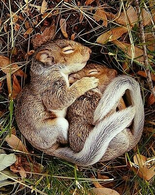 Baby Squirrels / Squirrel 8 x 10 / 8x10 GLOSSY Photo Picture Image #13