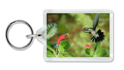 Green Hermit Humming Bird Photo Keyring Stocking Filler, AB-95K