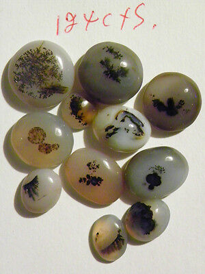 Dendritic Agate 11 Cabs Cabochons 124 Carats Total Weight
