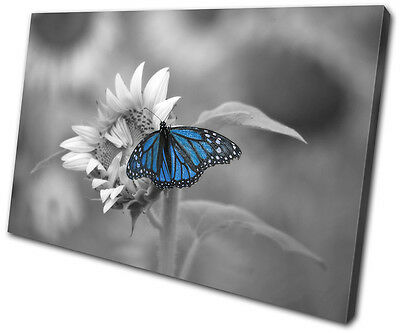 Animals Butterfly SINGLE CANVAS WALL ART Picture Print VA