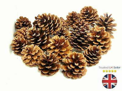 Natural Pine Cones 4cm-8cm Size Quality Pinecone Florists Crafts Decorative ML