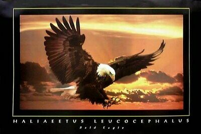 Bald Eagle Motivational Print - Rare New 24X36 Poster
