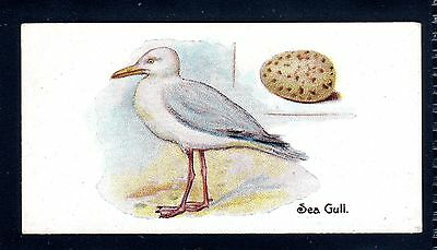 LAMBERT & BUTLER BIRDS & EGGS 1906 SEAGULL No.17