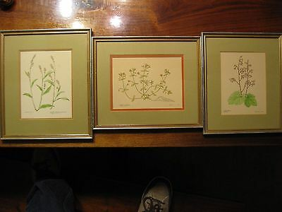 3 Early Original Vintage Jane Conneen 1970 Watercolor Painting Framed