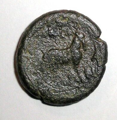 Ancient Greek Bronze coin. 400 - 300 BC. Goat