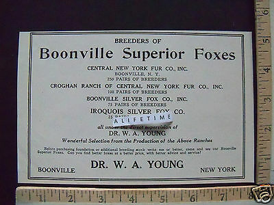 1930 Paper Ad Dr W A Young NY Boonville Superior Foxes Breeders