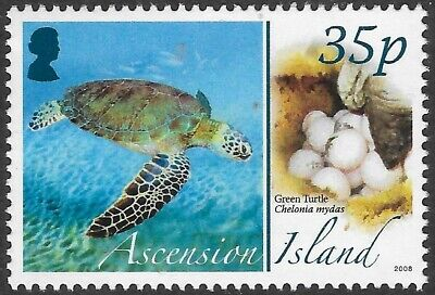 ASCENSION 2008 ANIMALS EGGS GREEN TURTLE 1v  MNH