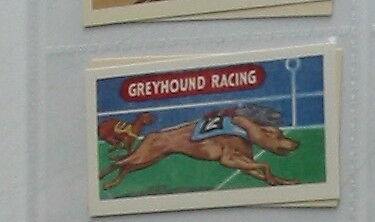 #14 greyhound racing - Sport card