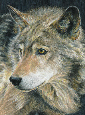 Color Pencil by Number WOLF Curious Eyes 9x12 Royal Langnickel