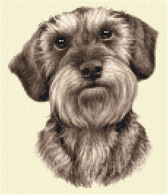 Wire Haired DACHSHUND dog, puppy -  full counted cross stitch kit
