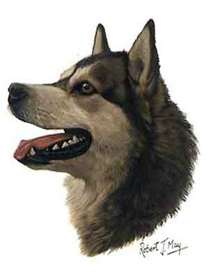 Alaskan Malamute Dog Robert May Art Greeting Card Set of 6