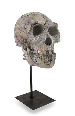 Distressed Neanderthal Skull Sculpture On Stand