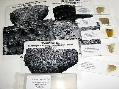 Devonian Hamar Laghdad Morocco coral THIN SECTION collection 5 types Favosites