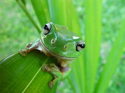 Nature Animal Amphibian Frog Leaf Green Poster Art Print Home Picture Bb1278A