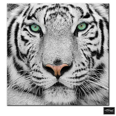 Animals Siberian Tiger Eye   BOX FRAMED CANVAS ART Picture HDR 280gsm