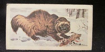 Wolverine #9 Nature Untamed Series of 24 Vintage Nabisco Collector Cards
