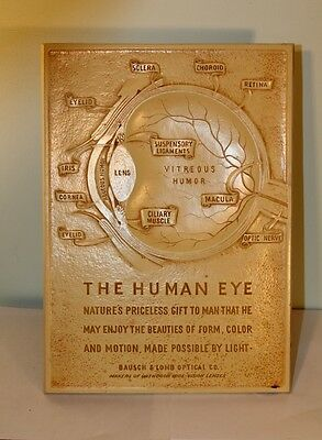 Bausch Lomb Syroco optical anatomy 3 D engraved advertisement plaque HUMAN EYE