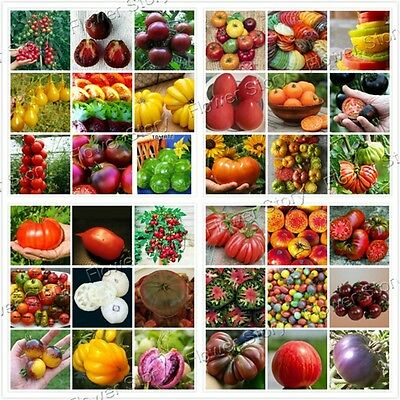 HEIRLOOM  200 Mix Tomato Seeds Home  Garden Vegetable Easy -grow Free Shipping