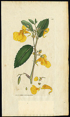 Antique Botany Print-YELLOW BALSAM-IMPATIENS-Smith-Sowerby-1802