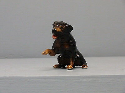 Old Northern Rose Rottweiler Dog